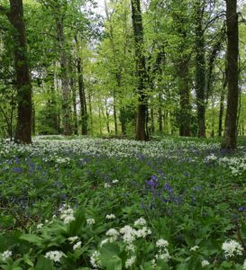 woodland, surnames, Drax, Charborough Estate