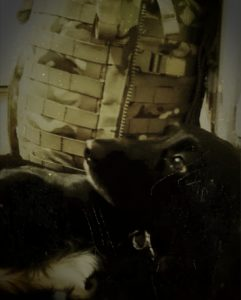 Spaniel, deployment